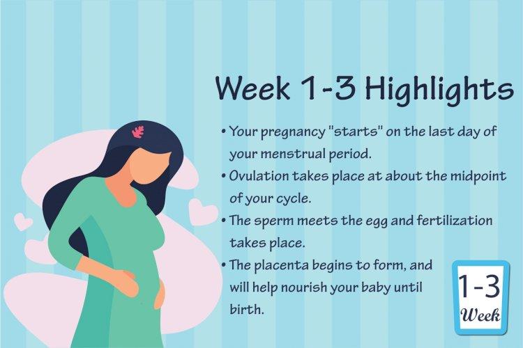 Pregnancy Week - 3
