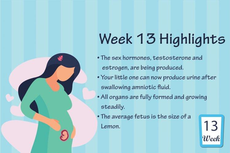 Pregnancy Week – 13