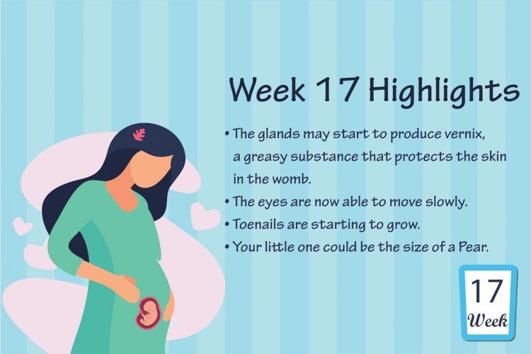 Pregnancy Week – 17